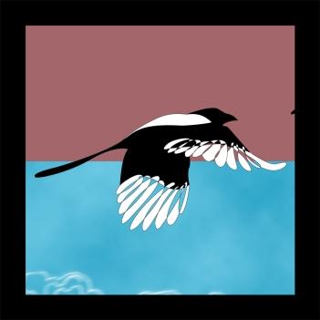 Magpie Illustration Detail